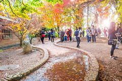 IMG_1653 (CBR1000RRX) Tags: 650d canon taiwan travel tourist landscape maple leaf autumn