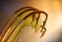 Pointing Hooks - HMM (M. Carpentier) Tags: macromondays arrow hooks hook hameçon hameçons yellow brown acier metal piquant pointu pin gold or