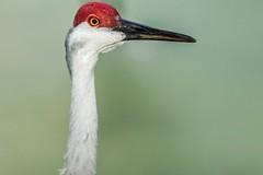 29 (photocat001) Tags: flamingogardens botanicalgardens animals wildlife nature parks recreation interesting