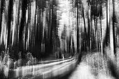 inside a  magic wood (valerio valeri) Tags: valerio valeri nikon mosso motion blackandwhite biancoenero wood