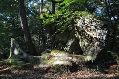 Roche (Apolline_ASBY) Tags: grès gris vert lumière ombre foret arbre roche