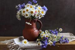 The Earth, The Sun, The Rain (panga_ua) Tags: daisies cornflowers fieldflowers summer earlyjune flowers theearth thesun therain theearththesuntherain raindrops water jug ceramics doily embroidery