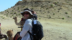 . (Uri ZACKHEM) Tags: ranch palestine camel negev naqab kurnub