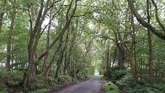 Near Alderley Edge