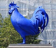Blue Cock Trafalgar Square