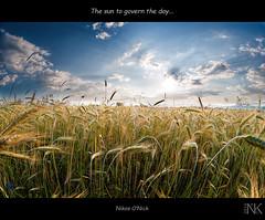 The sun to govern the day... (Nikos O'Nick) Tags: light sky sun field clouds landscape nikon day wheat hellas nikos fisheye greece rays 8mm ultrawide mesopotamia blending govern kastoria  samyang   onick   d300s        kotanidis