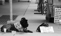 Canine Panhandler (Greg's Southern Ontario (catching Up Slowly)) Tags: street city urban dog toronto animal nikon homeless streetphotography canine panhandler dogphotography blackandwhitephotography animalphotography torontostreetphotography