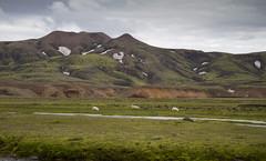 (snorri.s) Tags: nature canon landscape iceland highland 2014 landslag snorris