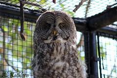 Owl (heeygloria) Tags: travel canada tourism nature animals outdoors photography zoo winnipeg wildlife manitoba assiniboinepark assiniboineparkzoo