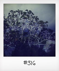 "#DailyPolaroid of 10-8-14 #316 • <a style=""font-size:0.8em;"" href=""http://www.flickr.com/photos/47939785@N05/14757957437/"" target=""_blank"">View on Flickr</a>"