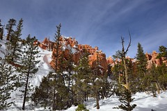 Trees, Hoodoos and then Blue Skies (Bryce Canyon National Park) (thor_mark ) Tags: trees sun nature utah unitedstates evergreens bryce portfolio brycecanyon day5 hoodoos snowylandscape lookingwest brycecanyonnationalpark navajoloop evergreentree project365 colorefexpro bryceamphitheater blueskieswithclouds nikond800e easternedgeofthepaunsauguntplateau horseshoeshapedamphitheater