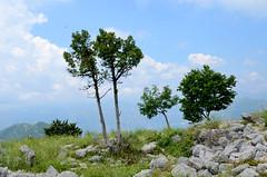 enkele spaarzame bomen op de 785 meter hoge Sveti Ilija berg op het Vrmac schiereiland, Montenegro juni 2014 (wally nelemans) Tags: trees bomen montenegro 2014 svilijavrmac