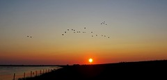 Sunset. (andre1949) Tags: sunset sun nature water birds landscape gold licht zomer polder warmte