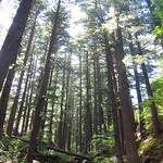 "Pines @ Pelister National Park <a style=""margin-left:10px; font-size:0.8em;"" href=""http://www.flickr.com/photos/14315427@N00/14855673666/"" target=""_blank"">@flickr</a>"