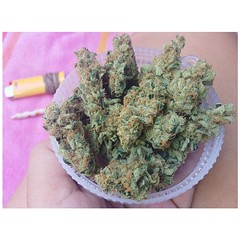 thcamy (weedstache) Tags: weed jane mj mary 420 medical pot oil wax cannabis 710 ents dank dabs mmj prop215 reddit weedstache stereodose