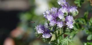Mon petit jardin (my little garden) - le casse-croûte à portée d'ailes.
