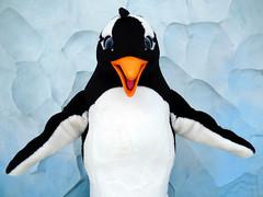 Puck (meeko_) Tags: penguin orlando florida antarctica characters puck seaworld themepark seaworldorlando seaofice seaworldcharacters antarcticaempireofthepenguin
