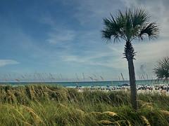 panama city beach florida (65mb) Tags: trees vacation tree beach gulfofmexico florida pcb sunshinestate floridabeaches beachvacation beachscenes vacationinflorida beachphotos panamacitybeachflorida treephotos visitflorida floridavacations photosoftrees 65mb placestoseeinflorida
