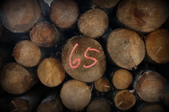 Number 65 (Crisp-13) Tags: wood trees tree forest cut timber rings trunk