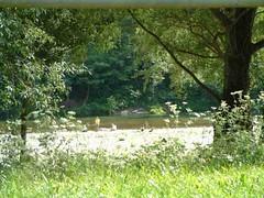 mot-2002-riviere-sur-tarn-mayor_rally_tarnview01_800x600