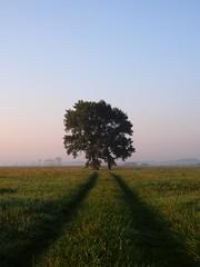útonállók (.e.e.e.) Tags: morning blue tree green field grass hungary earth explore dew milc greathungarianplain kiskunság micro43 microfourthirds bácskiskunmegye olympusomdem5 mzuiko1825