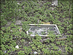 3275182766_87d1bc67ed_o (gray.florie) Tags: allrightsreserved usewithoutpermissionisillegal ©2009florencetomasulogray florencegray floriegrayflorencetomasulograytomasulofloriegrayfloriegraycom