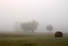 Hay Roll and Trees in Fog (tommyr68) Tags: trees oklahoma field fog nikon foggy pasture hay d60
