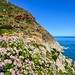 Flowers on Chapman's peak drive, Cape Town peninsula