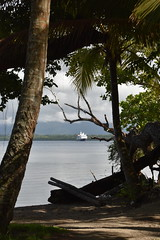 Papua New Guinea on Silversea Expeditions (TheLuxuryCruiseCo) Tags: silversea luxury cruise exploration expedition voyage papuanewguinea singsing baining firedance