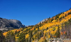 September 27, 2016 - A stunning display of fall colors in RMNP. (Michelle Jones)