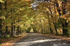 Illuminated Path (MarieFrance Boisvert) Tags: fall easterntownships quebec leaves