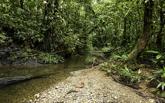 Immersed (creyesk) Tags: jungle colombia jungla sancipriano water river