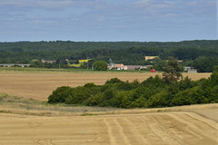 Une langue de bois au milieu du foin (Flikkersteph -4,000,000 views ,thank you!) Tags: countryside rural landscape nature summer beautiful fields clearsky champagneetfontaine prigord france