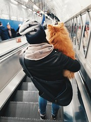 Let's go home (Darren Johnson / iDJ Photography) Tags: dog dogs pets cute fluffy trainstation escalator holding hold carry carrying london transportforlondon travel
