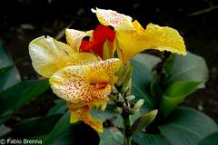 DSC_0655 (Fabio Brenna) Tags: flower flowers fiori fleurs flores colors orchid orchidea orchidee orchids orqudeas orchides