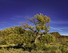 02469344-82-Autumn in Ash Meadows-1 (Jim There's things half in shadow and in light) Tags: ashmeadows canon5dmarkiv mojavedesert nevada sigma24105mmf4dg landscape nature wildlife tree sky autumn fall landsape