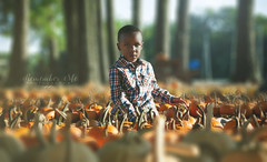 Hard Decision (taylormackenzie) Tags: little boy autumn fall october halloween pumpkin patch plaid shirt happy threenager three years old red pants toddler kid child son lineberger farm north carolina outside sunlight cute adorable baby smiles fun playful