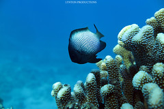 IMG_0057 copy (Aaron Lynton) Tags: lyntonproductions ocean turtle starfish maui hawaii canon g1x