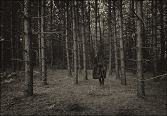 Untitled (mariammagsi) Tags: burqa ocad mfa thesis workinprogress veils nikon d7200 explore flickr identity gender culture algonquin logging woods fall