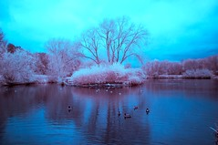 Capstone Country Park (Dan Bannon IR Photography) Tags: infrared ir 720nm lake trees landscape