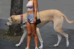 Large Dog (swong95765) Tags: dog canine huge big cute beautiful woman female lady girl animal shorts tan
