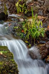 Stream (Steve_McCaul) Tags: beginnerdigitalphotographychallengewinner