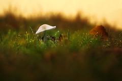 Mushroom (jamietaylor2127) Tags: mushroom fungus fungi autumn