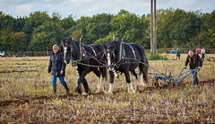 DSC05586 (Andy Oldster) Tags: eashing godalming farm plough ploughing heavyhorses shire sony alpha a65 slt