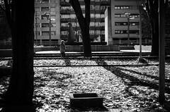 _DSC8453 (adrizufe) Tags: durango ezkurdi frayjuandezumarraga parque durangaldea duranguesado bizkaia basquecountry otoo udazkena autumn aplusphoto adrizufe adrianzubia d7000 nikon nikonstunninggallery ngc walking bw bn blackandwhite