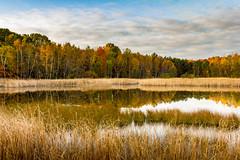 duck bait (Christian Collins) Tags: pond sunrise wetland reeds cattails canon t2i efs24mm midland michigan lago ontoo