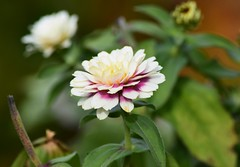 (careth@2012) Tags: petals