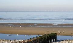 Pensarn beach in November (Gill Stafford) Tags: gillstafford gillys image photograph wales northwales abergele conwy sea seaside november sun sunshine weather beach pensarn gulls breakwater