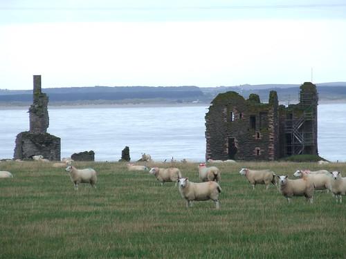 2016 # 066, Girnigoe Castle, Caithness 1.