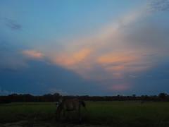 DSCN0321 (AndreAguilarP) Tags: naturaleza animal atardecer horse nature